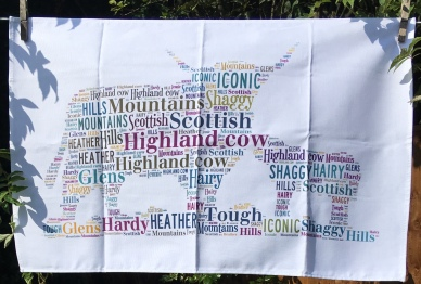 Highland Coo and Baby: 2019. To read the story www.myteatowels.wordpress.com/2019/08/12/hig