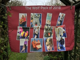 The Wolf Pack of 2018: To read the story www.myteatowels.wordpress.com/2018/05/21/wol