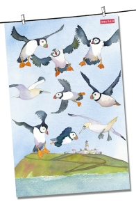 Puffins: On 'loan' from Emma Ball