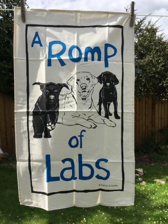 A Pomp of Labs: 2020. To read the story www.myteatowels.wordpress.com/2020/07/11/romp