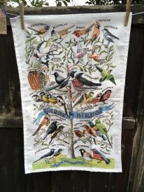 Garden Birds: 2018. Not yet blogged about
