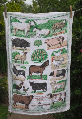 Rare Breeds: 1976. To read the story www.myteatowels.wordpress.com/2019/04/24/rare