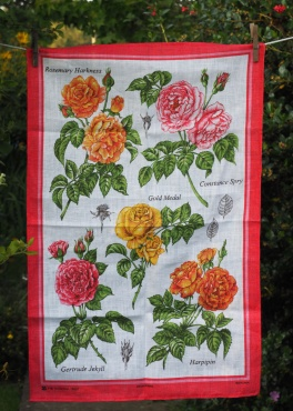 Breeders Rose: 2017 (original date unknown). To read the story www.myteatowels.wordpress.com/2017/07/28/bre