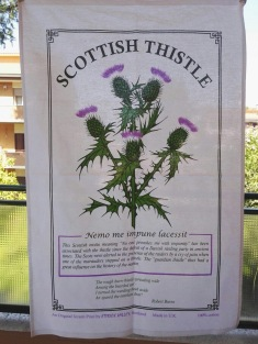 Scottish Thistle. On 'loan' from Andrew