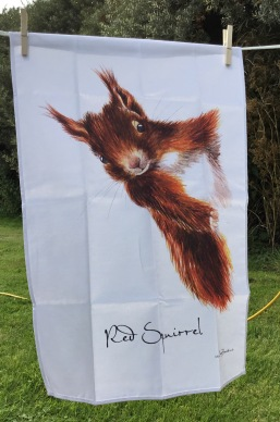 Red Squirrel: 2017. To read the story www.myteatowels.wordpress.com/2017/08/25/red