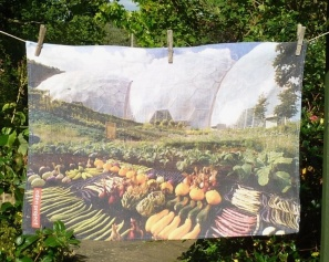 Eden Project: 2002. To read the story www.myteatowels.wordpress.com/2016/10/01/the-eden-project-2002/