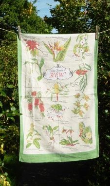 The Exotic Flowers of Kew: 1971 (and back to 1957 and forward to 1989). To read the story www.myteatowels.wordpress.com/2016/10/13/the
