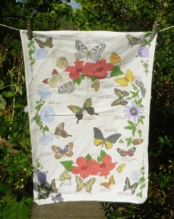 Butterflies: Date Unknown. Not yet blogged about