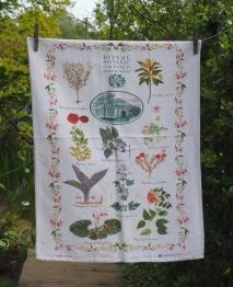 Edinburgh Botanic Gardens: 1998 onwards. To read the story www.myteatowels.wordpress.com/2018/03/26/edi