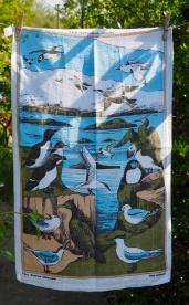 Farne Islands: 1972 onwards. To read the story www.myteatowels.wordpress.com/2018/05/08/far