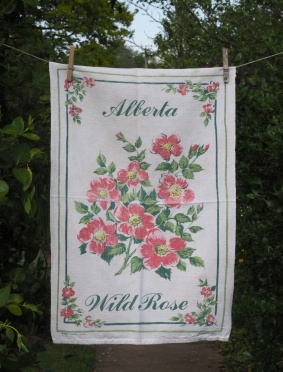 Alberta Wild Rose: 1988. To read the story www.myteatowels.wordpress.com/2017/12/14/can
