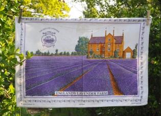 Norfolk Lavender: 1998. To read the story www.myteatowels.wordpress.com/2015/12/04/nor