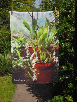 Botanical Gardens, Bristol: 2016. To read the story www.myteatowels.wordpress.com/2016/05/22/the-botanical-gardens-bristol-2016/