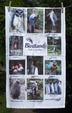 Birdland: Date Unknown. To read the story www.myteatowels.wordpress.com/2016/06/15/bir