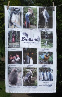 Birdland: Date Unknown. To read the story www.myteatowels.wordpress.com/2016/06/15/bir