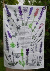 Norfolk Lavender: Acquired 2016. To be part of a Special Collection
