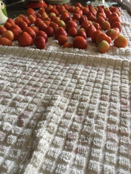 Make sure you only use old tea towels to dry your strawberries. Don't want to stain those beautiful new ones!!